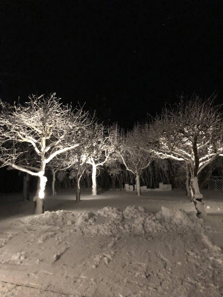Trädbelysning Gotland